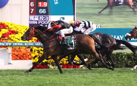 Former Hong Kong Horse of the Year Good Ba Ba is a graduate of the Hong Kong International Sale.