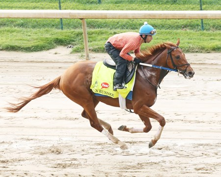 Gun Runner - Churchill Downs, May 1, 2016