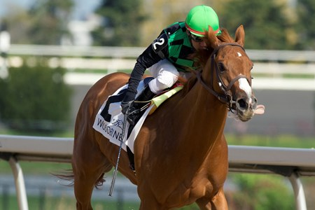Woodbine Racetrack Jockey Huber Villa-Gomez guides Cactus Kris to victory in the $150,000 dollar Hendrie Stakes at Woodbine Racetrack May 8, 2016.