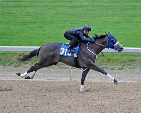 Fasig-Tipton Midlantic Two Year Olds In Training 2016 Hip 310 colt, Mission Impazible - Voodoo's Argument