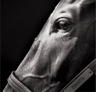 This close-up of Zenyatta is part of a fine arts photography exhibit created by Neil Latham of New York.