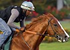 California Chrome to Run for Cancer Research