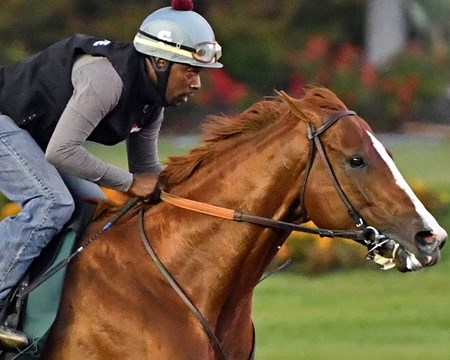 California Chrome - Los Alamitos, June 18, 2016