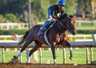 Firing Line works at Santa Anita Park June 19.