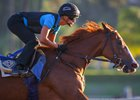 Stellar Wind works June 19