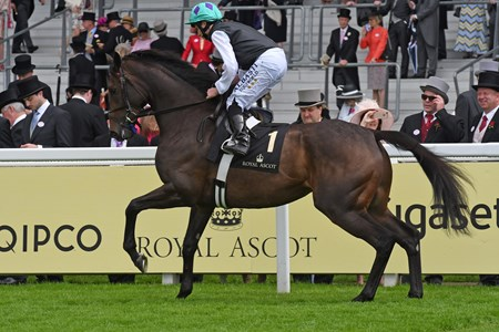 Miss Temple City fourth in the Duke of Cambridge Stakes Royal Ascot, UK  6/15/16