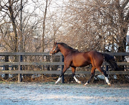 Get Stormy in his paddock at Crestwood Farm stallion barn on March 20, 2013, near Lexington, Ky.