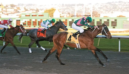 Silver Medallion wins the El Camino Real Derby at Golden Gate Fields Feb. 12, 2011.