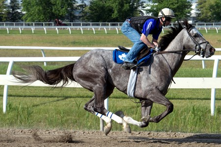 Queen's Plate contender My Name Is Jim breezes under Jockey Jesse Campbell in preparation for the $1,000,000 Queen's Plate Stakes at Woodbine on Sun., July 3, 2016.