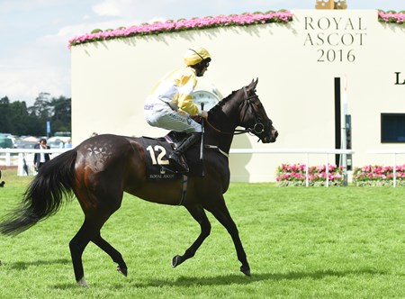 Quiet Reflection wins the 2016 Commonwealth Cup at Royal Ascot on June 17, 2016