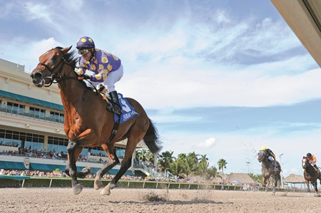 Awesome Banner wins the Swale Stakes (gr. 2) at Gulfstream Park on January 30, 2016.