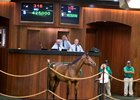 War Front Filly Lights Up OBS Bid Board