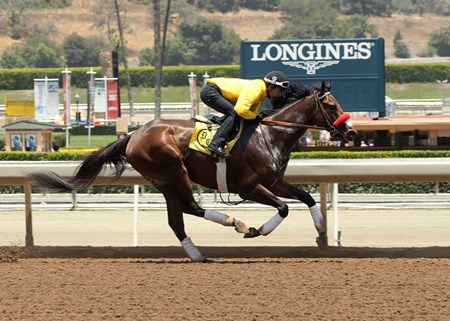 With regular rider Mario Gutierrez aboard, Kentucky Derby winning Nyquist worked five furlongs in 1:02.07 prior the first race today, June 25, 2016 at Santa Anita Park, Arcadia, CA