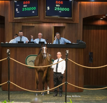 OBS June 2016 Hip 866 Into Mischief - Simple Symphony