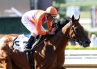 Beholder winning the 2016 Vanity Mile