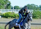 Destin galloping at Belmont Park last June