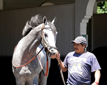 Cherry Wine schooling with Belmont Stakes contenders at Belmont Park in Elmont, New York on June 9, 2016.