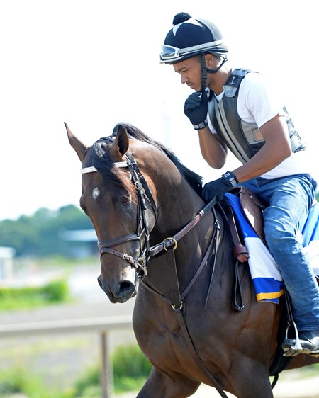 Exaggerator with Peedy Landry Morning works with Belmont Stakes contenders at Belmont Park in Elmont, New York.