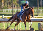 Beholder works June 19.