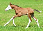 Colt by Bodemeister born at Southern Equine Farm