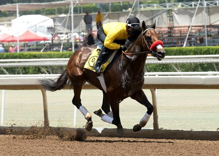With regular rider Mario Gutierrez aboard, Kentucky Derby winning Nyquist worked five furlongs in 1:02.07 prior the first race today, June 25, 2016 at Santa Anita Park, Arcadia, CA ©Benoit Photo