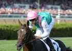 Flintshire, winning last year's Sword Dancer