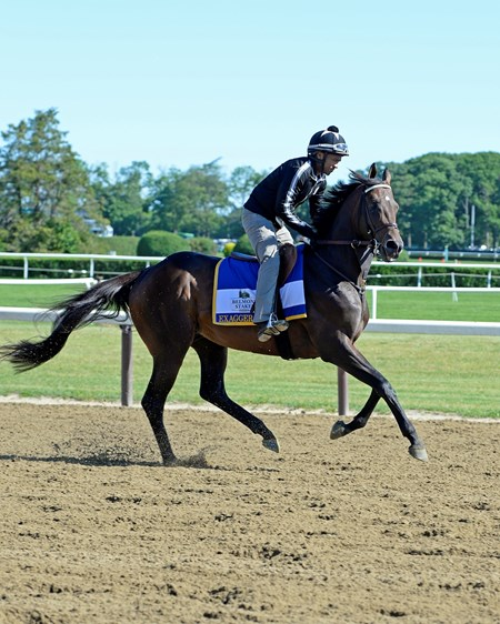 Exaggerator with Peedy Landry on the main track at Belmont Park on June 10, 2016.