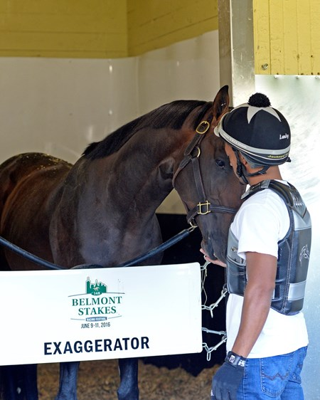 Exercise rider Peedy Landry with Exaggerator. Morning works with Belmont Stakes contenders at Belmont Park in Elmont, New York.
