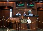 Two Big-Priced Horses Sell at OBS