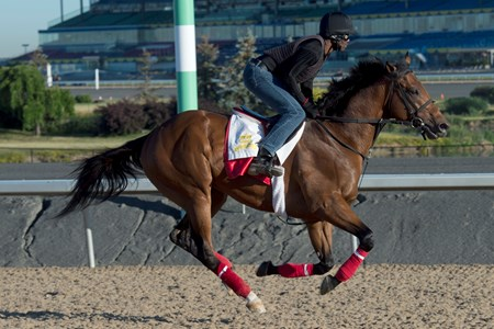 June 30, 2016.Woodbine Racetrack.Queen's Plate contender Leavem in Malibu gallops under exercise rider Wayne Brown.