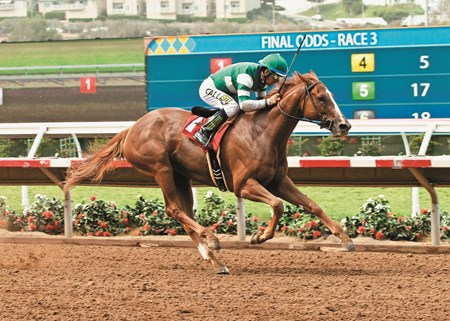 Hronis Racing's Stellar Wind jockey Victor Espinoza win the Grade III, $100,000 Torrey Pines Stakes, Sunday, August 30, 2015 at Del Mar Thoroughbred Club, Del Mar CA.