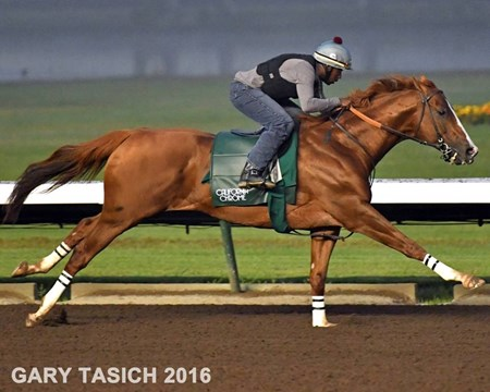 California Chrome - Los Alamitos, June 4, 2016