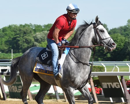Cherry Wine works at Belmont Park June 7, 2016