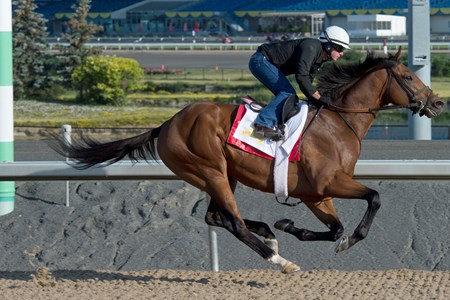 June 29, 2016 Queen's Plate contender Leavem in Malibu breezes under Jockey Gary Boulanger