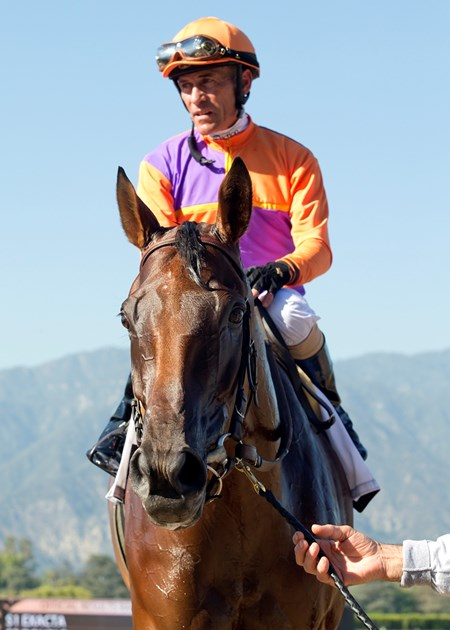 Jockey Gary Stevens guides Beholder to the winner's circle after their victory in the Grade I, $400,000 Vanity Mile, Saturday, June 4, 2016 at Santa Anita Park, Arcadia CA.