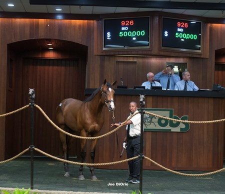 OBS June 2016 Hip 926 City Zip-Successful Sarah  sold  for $800,000