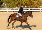 Caught Me Looking in last year's Thoroughbred Makeover.