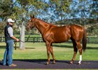 Consignors High on Animal Kingdom Yearlings