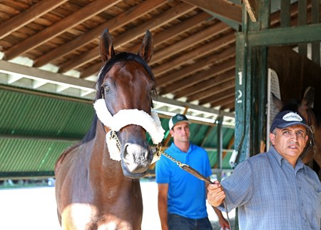 Kentucky Derby Champion Nyquist checks out his surroundings while walking around the barn with groom Elias Anaya after arriving at Monmouth Park Racetrack
