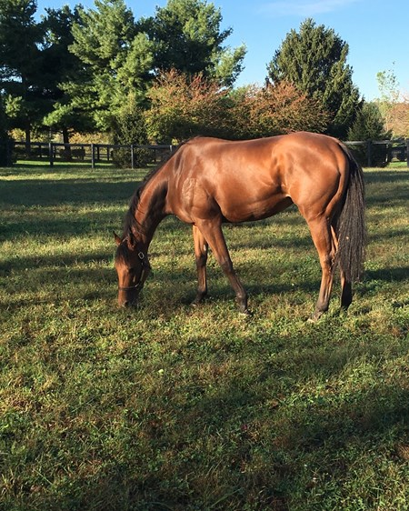 Lady Eli spent some quiet time at Dell Ridge Farm near Lexington as part of her recovery from laminitis