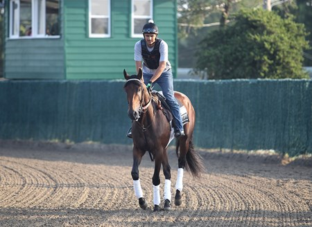 Nyquist with exercise rider Jonny Garcia jogs on the track at Monmouth Park in Oceanport, New Jersey on Saturday morning July 30, 2016.