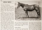 Stud News on La Troienne in the February 6, 1954 Issue of Blood-Horse