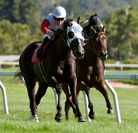 Dreamarcher wins the 2016 Wine Country Stakes.