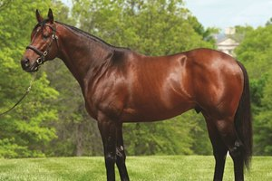 Alternation stands at Pin Oak Stud in Kentucky