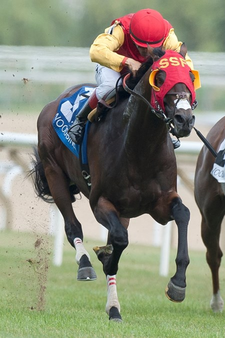 Up With the Birds wins the 2016 Nijinsky Stakes.