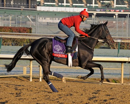 Stacelita works and schooling with Breeders' Cup horses at Churchill Downs in Louisville, Ky. on Oct. 30, 2011