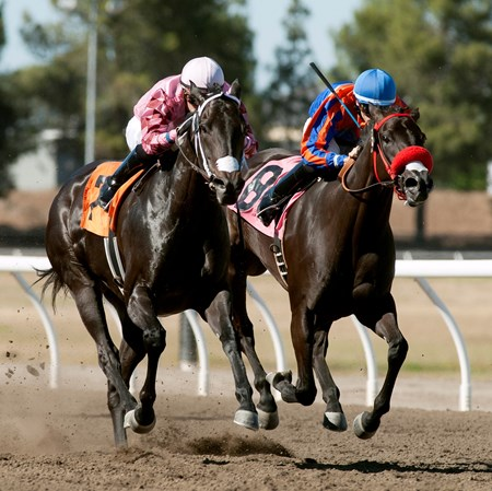Toomuchisnotenough with jockey Juan Hernandez win the 2016 California Governor's Cup