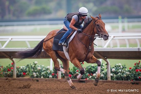 Beholder - Del Mar, July 24, 2016