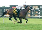 American Patriot won the Kent Stakes and was grade I-placed in the Secretariat