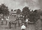 Yearlings being shown at Keeneland in 1943